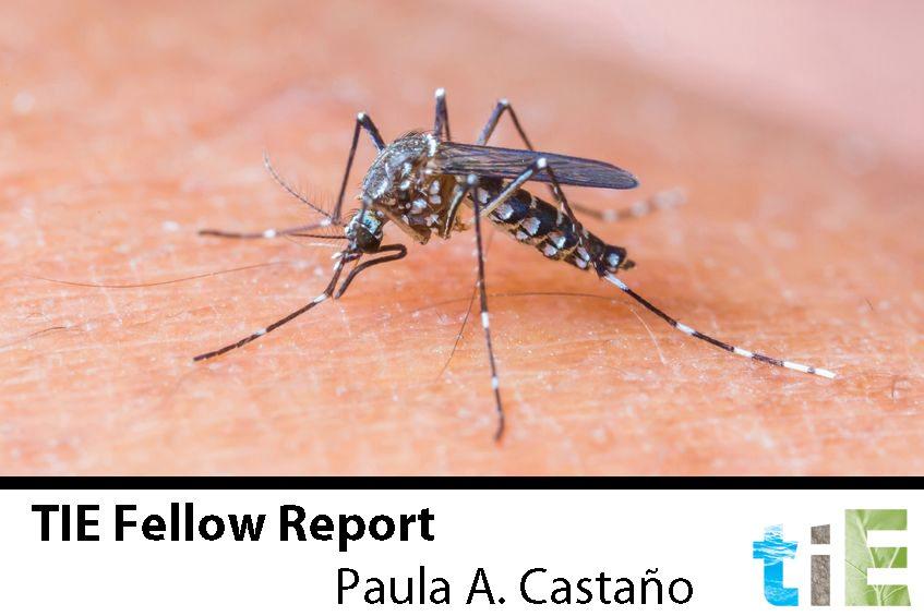 Paula A. Castaño – TIE Fellow Report